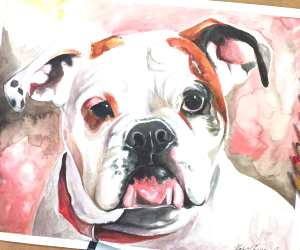 Jersey Dog drawing by Katy Lipscomb Art